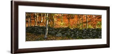 Old Rock Wall-Brenda Petrella Photography LLC-Framed Giclee Print