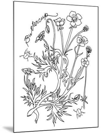 Botanical Buttercup BW for Coloring-Cyndi Lou-Mounted Giclee Print