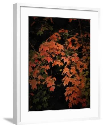 Fall Colours 2-Dorothy Berry-Lound-Framed Giclee Print