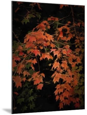 Fall Colours 2-Dorothy Berry-Lound-Mounted Giclee Print