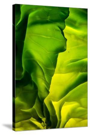 Cabbage detail showing veins. Lit from within.-Brent Bergherm-Stretched Canvas Print