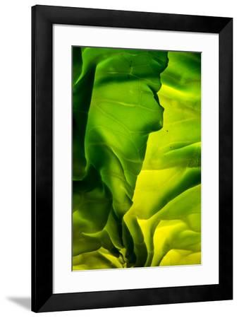 Cabbage detail showing veins. Lit from within.-Brent Bergherm-Framed Premium Photographic Print