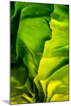 Cabbage detail showing veins. Lit from within.-Brent Bergherm-Mounted Premium Photographic Print
