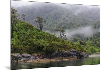 Chile, Patagonia, Lake District, Pumalin National Park. Valdivian rainforest-Fredrik Norrsell-Mounted Premium Photographic Print