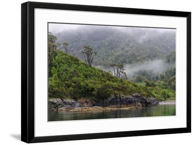 Chile, Patagonia, Lake District, Pumalin National Park. Valdivian rainforest-Fredrik Norrsell-Framed Premium Photographic Print