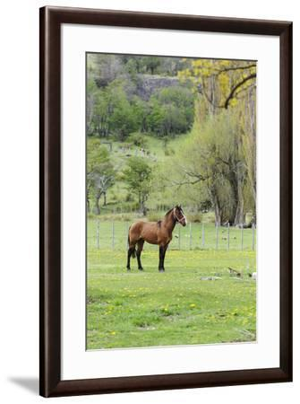 Chile, Aysen, Cerro Castillo. Horse in pasture.-Fredrik Norrsell-Framed Premium Photographic Print