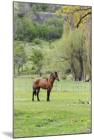 Chile, Aysen, Cerro Castillo. Horse in pasture.-Fredrik Norrsell-Mounted Premium Photographic Print