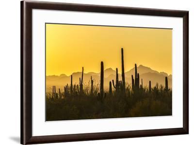 USA, Arizona, Saguaro National Park. Sonoran Desert at sunset.-Jaynes Gallery-Framed Premium Photographic Print