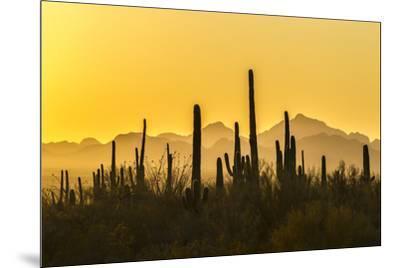 USA, Arizona, Saguaro National Park. Sonoran Desert at sunset.-Jaynes Gallery-Mounted Premium Photographic Print
