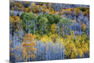 USA, Lee Vining, California. Conway Pass, Mono County.-Joe Restuccia III-Mounted Premium Photographic Print