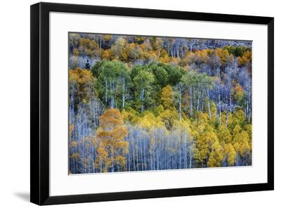 USA, Lee Vining, California. Conway Pass, Mono County.-Joe Restuccia III-Framed Premium Photographic Print