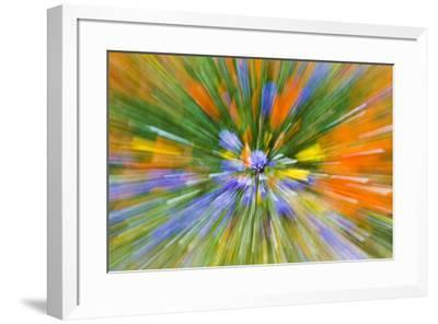 Wildflower abstract, Tehachapi Mountains, Angeles National Forest, California, USA-Russ Bishop-Framed Premium Photographic Print