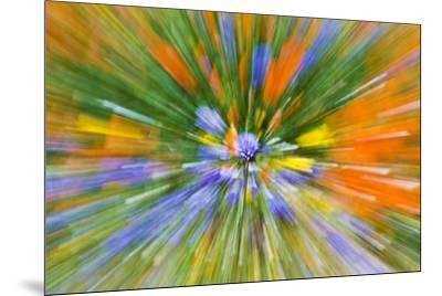 Wildflower abstract, Tehachapi Mountains, Angeles National Forest, California, USA-Russ Bishop-Mounted Premium Photographic Print