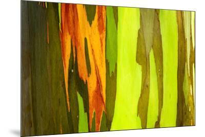 Rainbow Eucalyptus bark, Mindanao Gum, Island of Kauai, Hawaii, USA-Russ Bishop-Mounted Premium Photographic Print