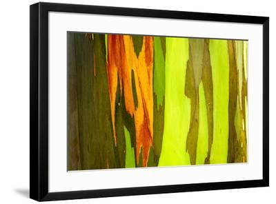 Rainbow Eucalyptus bark, Mindanao Gum, Island of Kauai, Hawaii, USA-Russ Bishop-Framed Premium Photographic Print