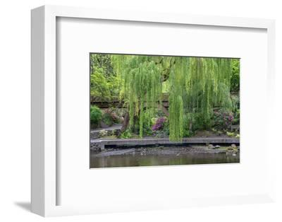 USA, Oregon, Portland, Weeping willow above small creek and blooming azalea.-John Barger-Framed Photographic Print