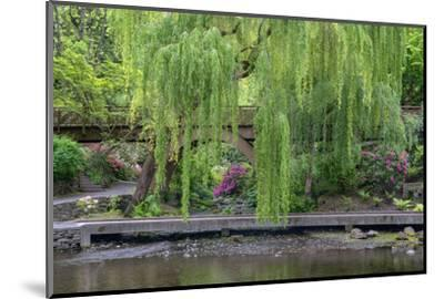 USA, Oregon, Portland, Weeping willow above small creek and blooming azalea.-John Barger-Mounted Photographic Print