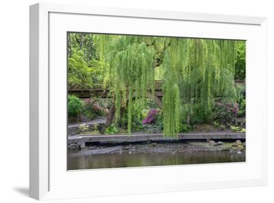 USA, Oregon, Portland, Weeping willow above small creek and blooming azalea.-John Barger-Framed Premium Photographic Print