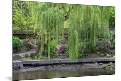 USA, Oregon, Portland, Weeping willow above small creek and blooming azalea.-John Barger-Mounted Premium Photographic Print