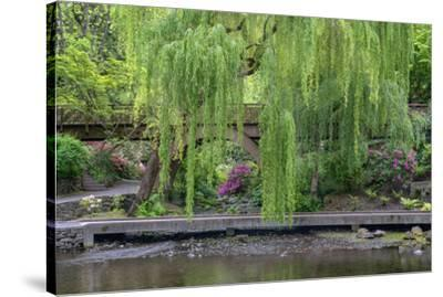 USA, Oregon, Portland, Weeping willow above small creek and blooming azalea.-John Barger-Stretched Canvas Print