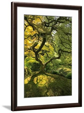 Usa, Oregon, Portland. Japanese lace maple tree-Jaynes Gallery-Framed Premium Photographic Print