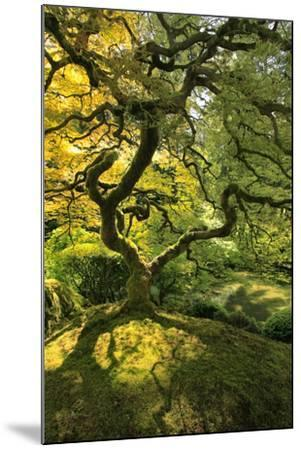 Usa, Oregon, Portland. Japanese lace maple tree-Jaynes Gallery-Mounted Premium Photographic Print
