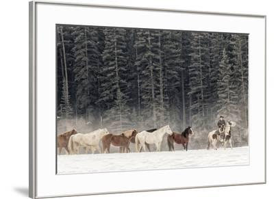 Horse roundup in winter, Kalispell, Montana.-Adam Jones-Framed Premium Photographic Print