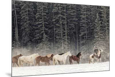 Horse roundup in winter, Kalispell, Montana.-Adam Jones-Mounted Premium Photographic Print