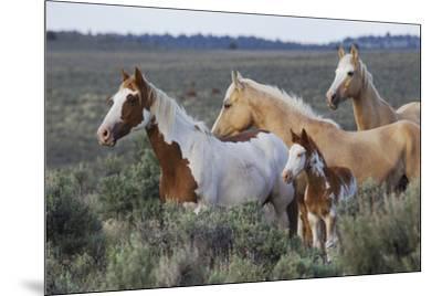 Wild horses, Mustangs-Ken Archer-Mounted Premium Photographic Print