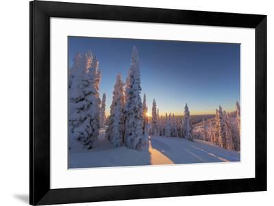 Setting sun through forest of snow ghosts at Whitefish, Montana, USA-Chuck Haney-Framed Premium Photographic Print