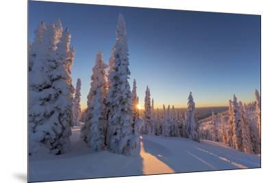 Setting sun through forest of snow ghosts at Whitefish, Montana, USA-Chuck Haney-Mounted Premium Photographic Print
