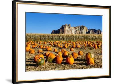 USA, Oregon, Bend. Pumpkin harvest-Hollice Looney-Framed Premium Photographic Print