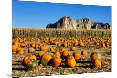 USA, Oregon, Bend. Pumpkin harvest-Hollice Looney-Mounted Premium Photographic Print