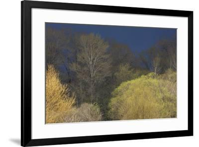 Shades of early Spring-Ken Archer-Framed Premium Photographic Print