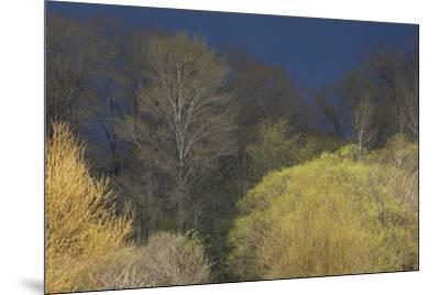 Shades of early Spring-Ken Archer-Mounted Premium Photographic Print