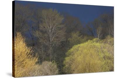 Shades of early Spring-Ken Archer-Stretched Canvas Print