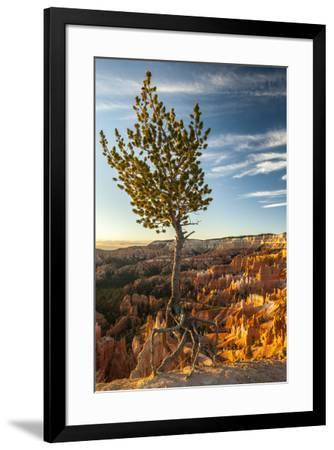 USA, Utah, Bryce Canyon National Park. Sunrise on ponderosa pine and canyon.-Jaynes Gallery-Framed Premium Photographic Print