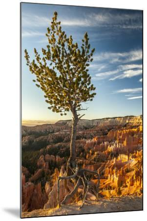 USA, Utah, Bryce Canyon National Park. Sunrise on ponderosa pine and canyon.-Jaynes Gallery-Mounted Premium Photographic Print