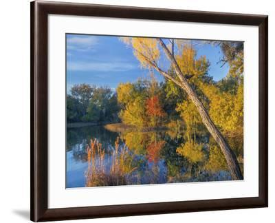 Inks Lake, Inks Lake State Park, Texas.-Tim Fitzharris-Framed Photographic Print