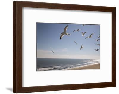 Virginia Beach, Virginia. Flock of Seagulls Fly over a Beach-Jolly Sienda-Framed Photographic Print