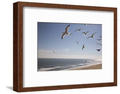Virginia Beach, Virginia. Flock of Seagulls Fly over a Beach-Jolly Sienda-Framed Premium Photographic Print
