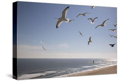 Virginia Beach, Virginia. Flock of Seagulls Fly over a Beach-Jolly Sienda-Stretched Canvas Print
