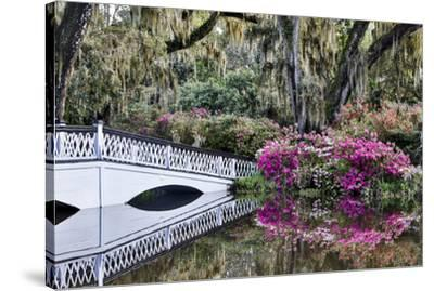 USA, North Carolina., white bridge with Azaleas and moss-covered tree-Hollice Looney-Stretched Canvas Print