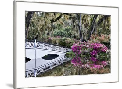 USA, North Carolina., white bridge with Azaleas and moss-covered tree-Hollice Looney-Framed Premium Photographic Print