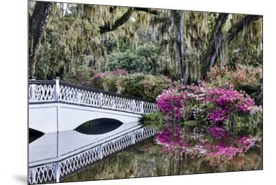 USA, North Carolina., white bridge with Azaleas and moss-covered tree-Hollice Looney-Mounted Premium Photographic Print