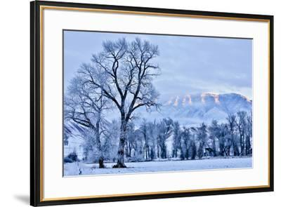 USA, Wyoming, Shell, Hoar Frost in the Valley-Hollice Looney-Framed Premium Photographic Print