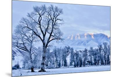 USA, Wyoming, Shell, Hoar Frost in the Valley-Hollice Looney-Mounted Premium Photographic Print