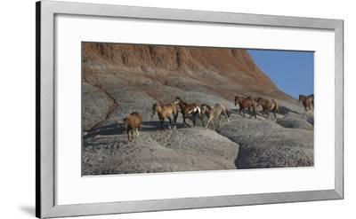 USA, Wyoming, Shell, The Hideout Ranch, Horses Walking the Hillside-Hollice Looney-Framed Photographic Print