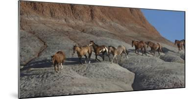 USA, Wyoming, Shell, The Hideout Ranch, Horses Walking the Hillside-Hollice Looney-Mounted Photographic Print