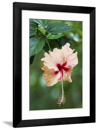 Wildflower, Asa Wright Nature Center, Trinidad-Ken Archer-Framed Premium Photographic Print